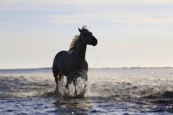 horse-1401914_1920